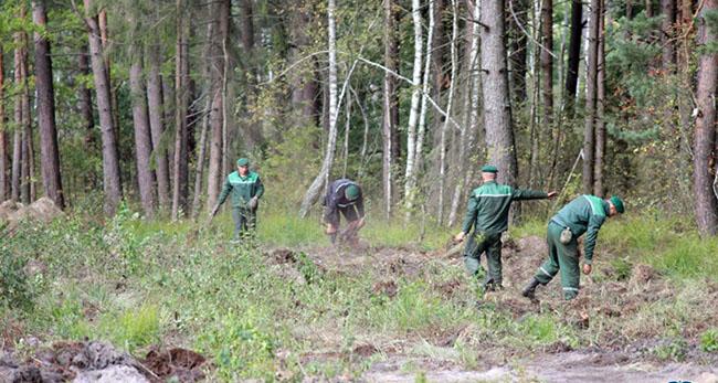 Беларусь начала строительство стены на границе с Украиной