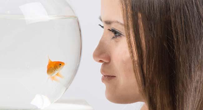За стеклом: аквариум в современном интерьере