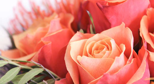 Импортная красота: поставки цветов в Украину к началу 2019 продолжали увеличиваться