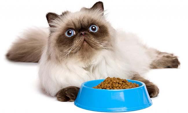 Корм для кошек Роял Канин (Royal Canin) - отзывы и советы